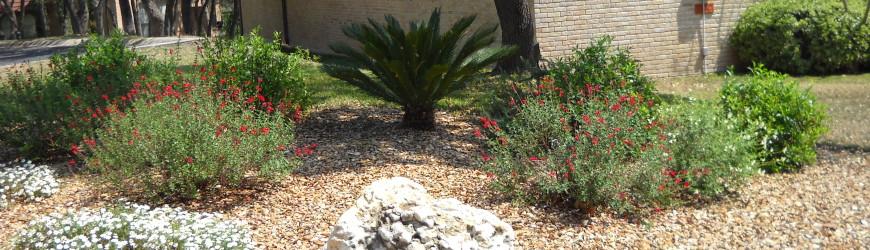 Oliva Landscaping Commercial HOA Landscaping San Antonio TX